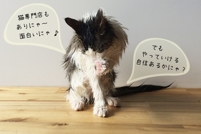 猫専門の美容師、そういう仕事はあるのか